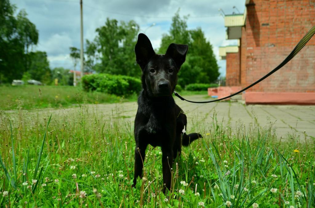 собака тишка картинки