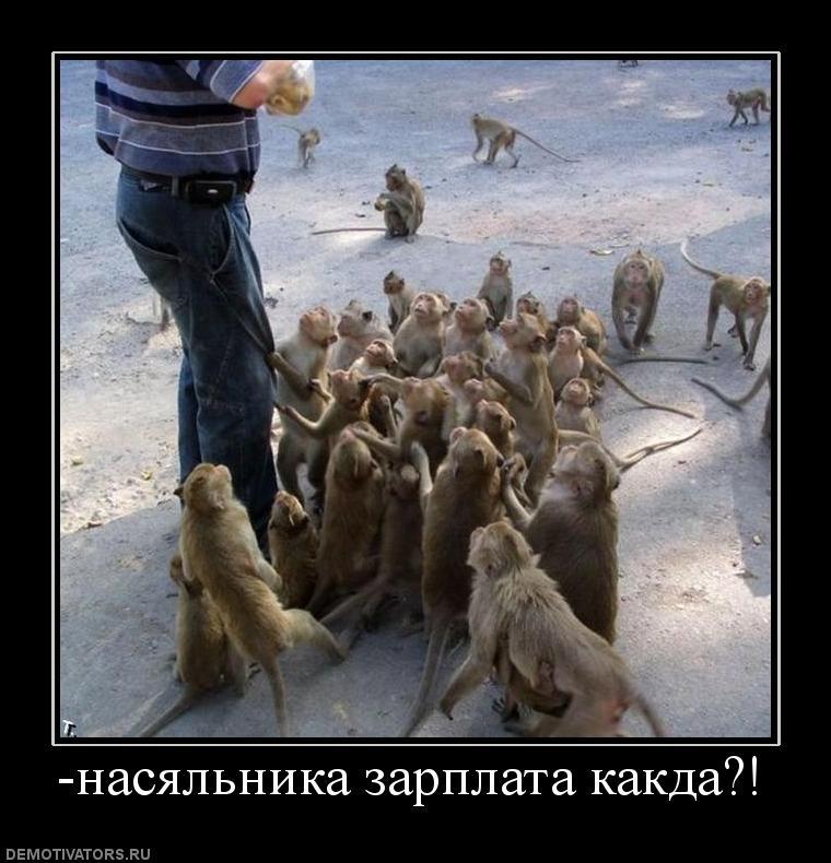 собак: почему руководитель испытывает удовлетворение когда выдает зп узнать, что