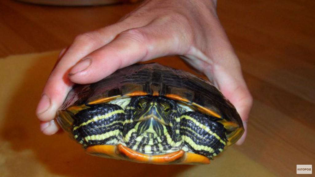 черепахи на удочку