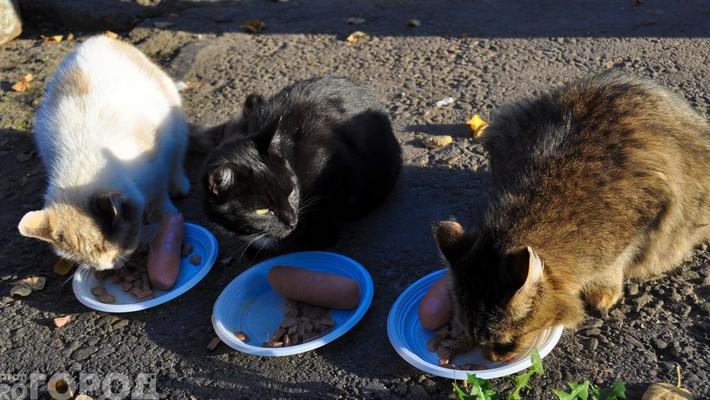Журналисты провели акцию  «Покорми бездомное животное»