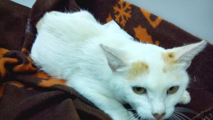 Недалеко от Чебоксар кормящей кошке топором отрезали две задние лапы