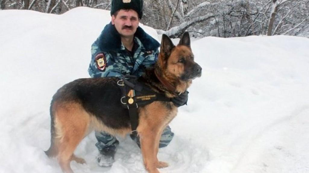 какие собаки служат в полиции кипрее Собираем целебные