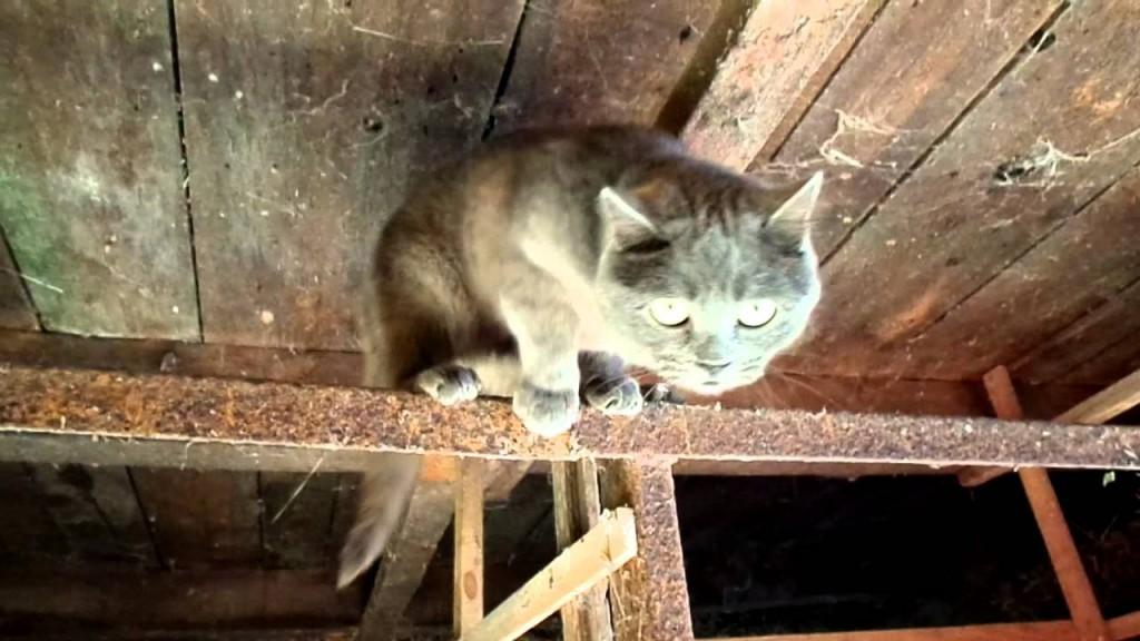В Чувашии изолировали деревню из-за кошки, которая нападала на людей