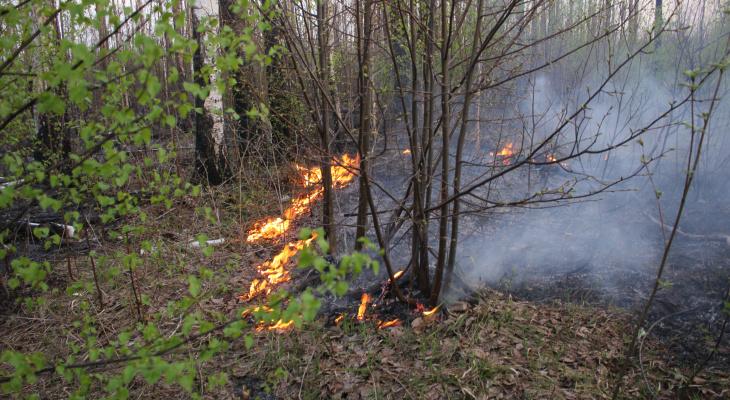 В Алатырском районе третий день горит лес, подожженный тепловозом