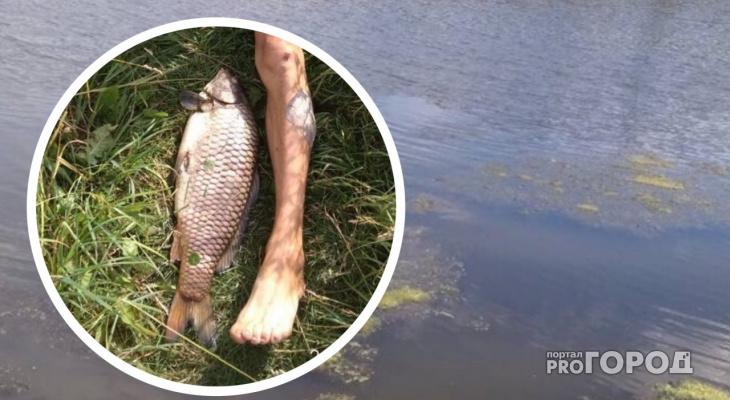 В Чебоксарском районе массово гибнет речная рыба