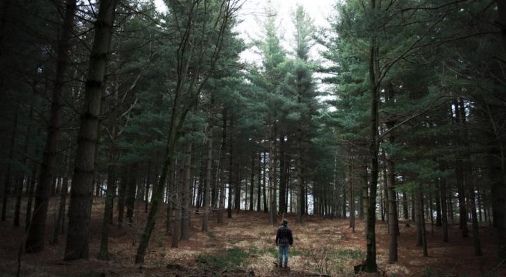 Лайфхак от «Про Города»: посадить дерево за 2 часа