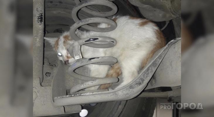 В Чебоксарах котенок залез под капот автомобиля