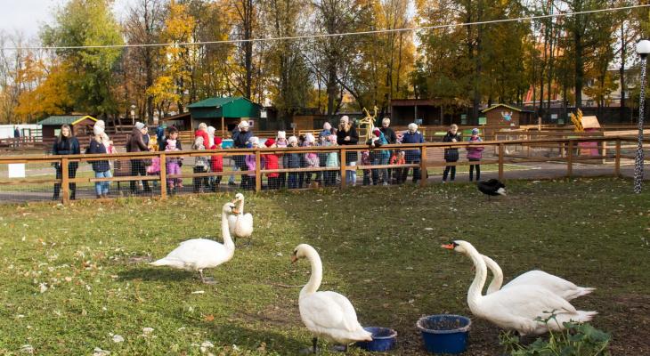 Бесплатные мероприятия в Чебоксарах, которые придутся по вкусу и детям, и взрослым