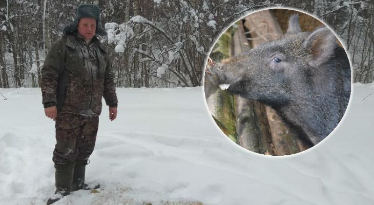 В Батыревском районе кабанам помогают пережить зиму
