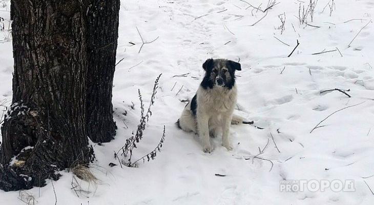 Чиновники напомнили о штрафах за выгул собак в парках и без поводка