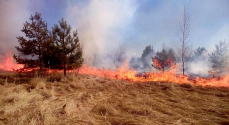 В Чувашии удалось поймать и оштрафовать 6 человек за сжигание травы