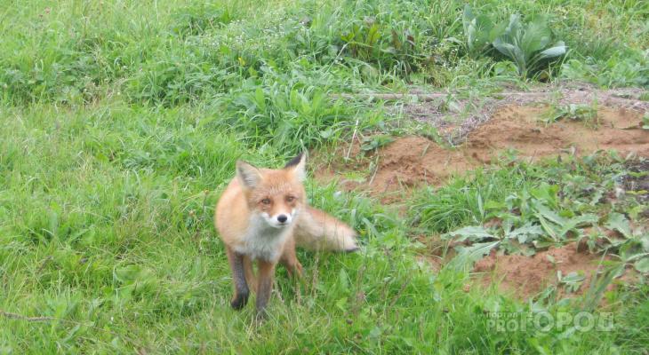 В лесах Чувашии разложат брикеты, съедобные для животных и опасные для людей