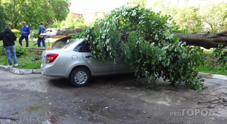 """Старое дерево раздавило две """"Лады"""" в Новочебоксарске"""