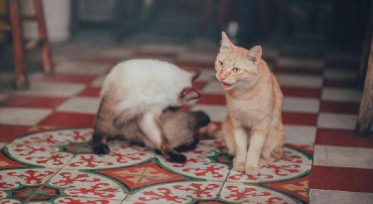 Чебоксарку оштрафовали за двух кошек и собаку в квартире