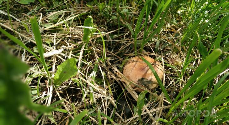 Руководство детсада скрыло от МВД групповой несчастный случай с отравлением грибами