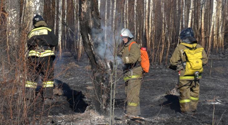 134 жителя Чувашии привлечены к ответственности за разведение костров и сжигание травы