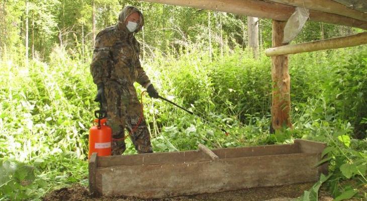 В Чувашии проводят дезинфекцию от африканской чумы