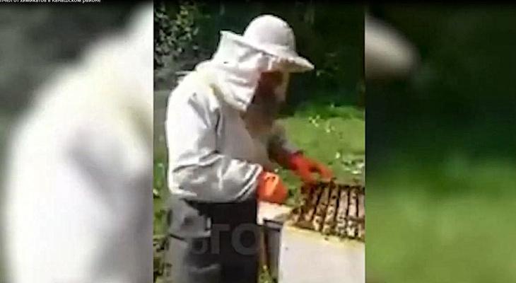 Житель Канашского района возмущен массовой гибелью пчел