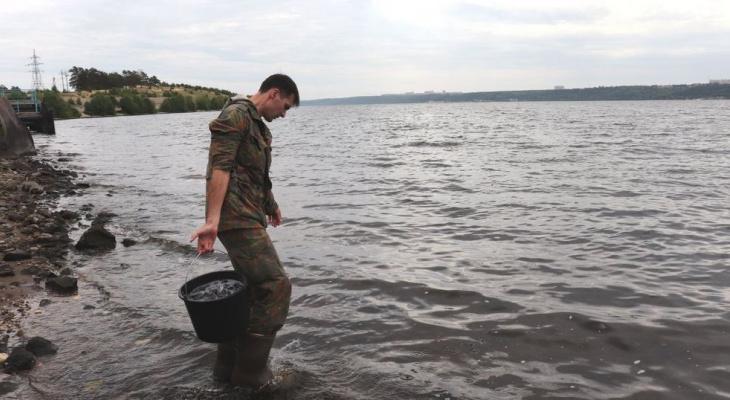 В Волгу выпустили 10 тысяч мальков «царской» рыбы