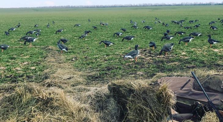 Каждому охотнику в Чувашии разрешено будет застрелить 2 гуся в день