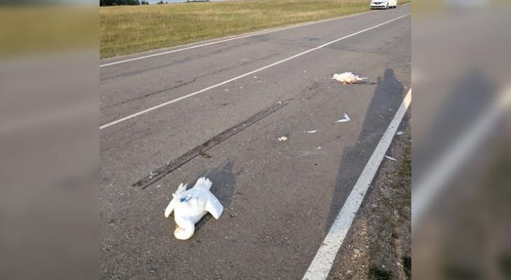 В Урмарском районе неизвестный лихач сбил семь гусей