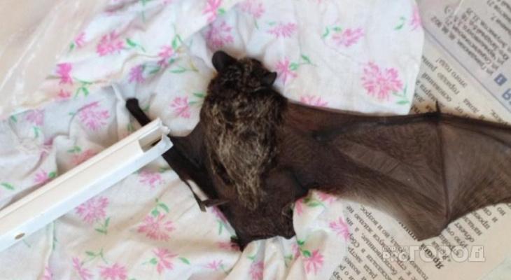 В Чебоксарах летучая мышь залетела в квартиру