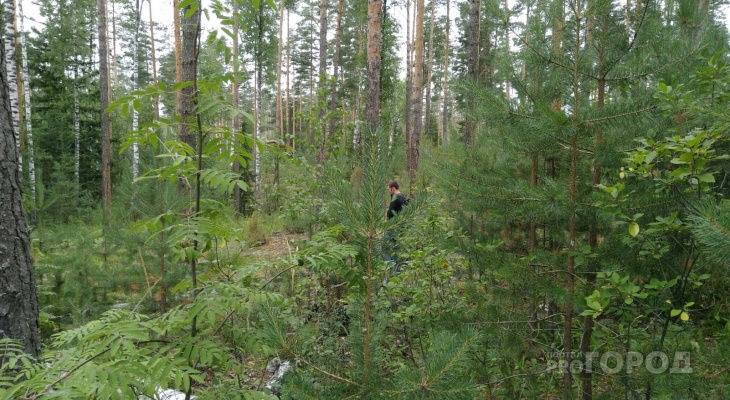 В Чебоксарском районе грибник потерялся и провел ночь в лесу