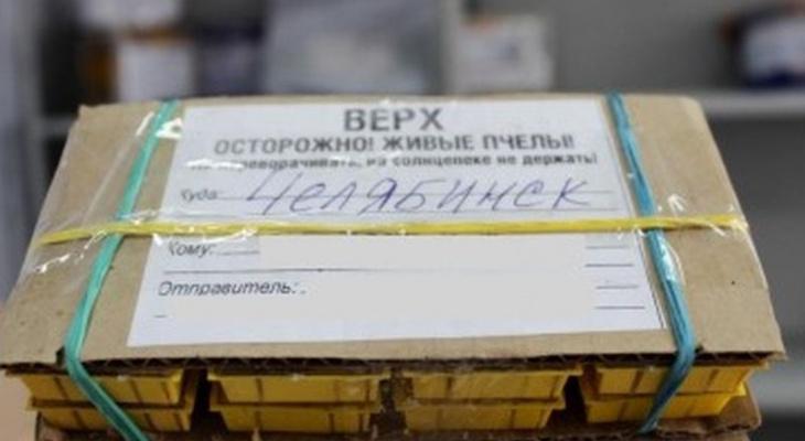 Из Чебоксар в Челябинск доставили «живую» посылку