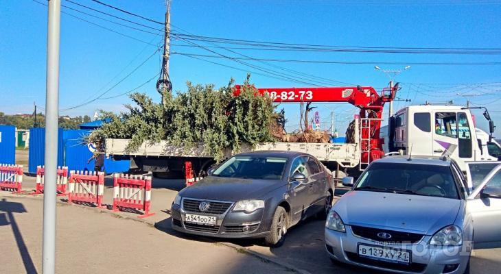 Очередная ель помешала реконструкции Красной площади