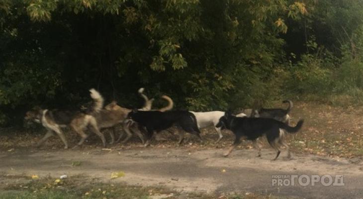 В Новочебоксарске парни отбили у собак котенка и пытались доставить его к ветеринару