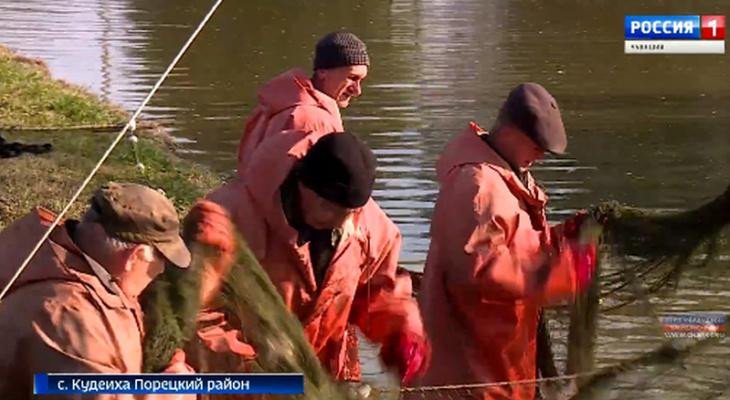 В Порецком районе разводят два вида рыбы, выведенных в Чувашии