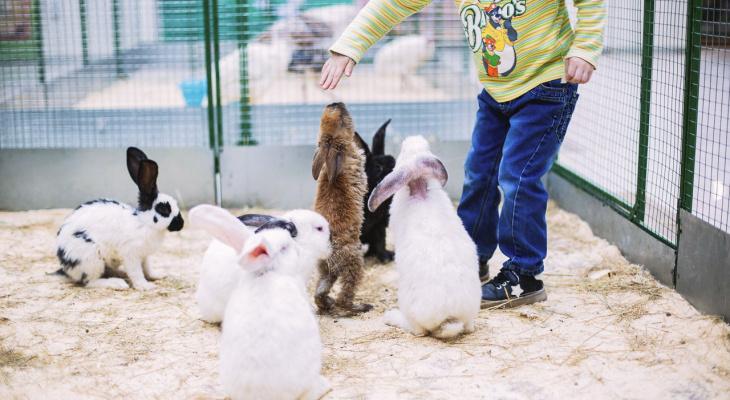 Юные чебоксарцы могут поиграть с редкими зверушками на выставке животных