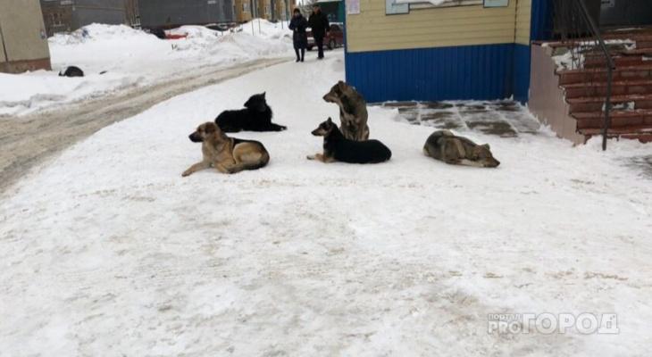 Игнатьев поручил усилить контроль за бездомными собаками