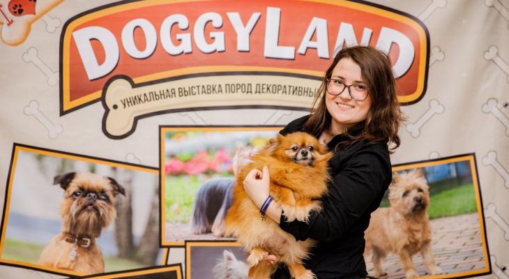 В Чебоксарах открывается выставка декоративных собак в необычном формате