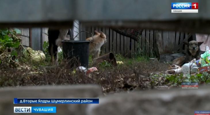 Прокуратура проверила деревню, где жители жаловались на собак и гибель овец