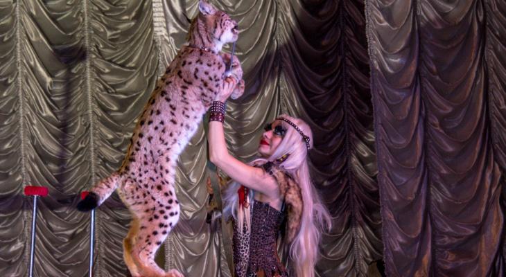 Дворец культуры «Химик» на один день станет ареной цирка
