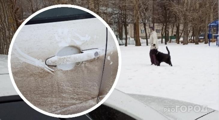 Чебоксарец: «Лабрадор набросился на мою машину, а хозяйка даже не извинилась»