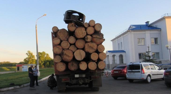 Лесник тайно продал целый КамАЗ сосен из чувашского леса