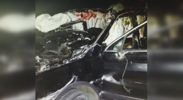 В Ядринском районе водитель погиб в столкновении с лосем