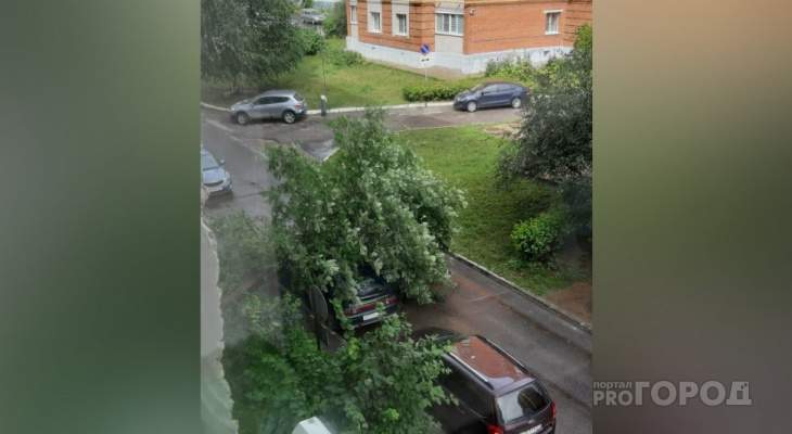 Из-за непогоды в Чувашии падали деревья: одно повредило машину