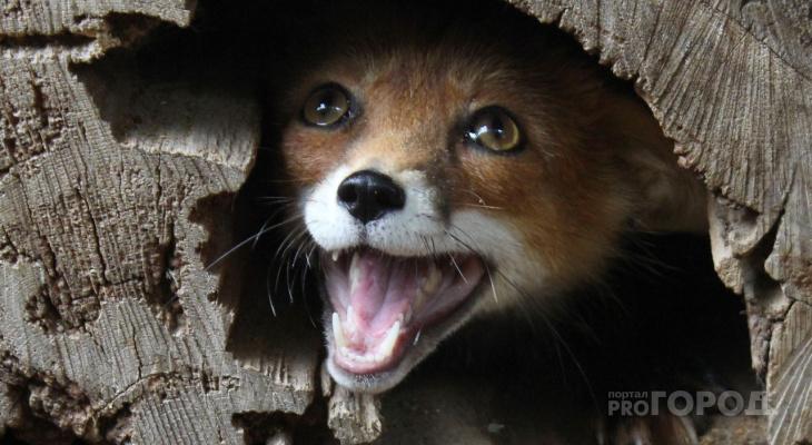 Как живут звери в зоопарке Новочебоксарска в период пандемии