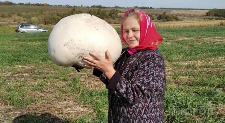 """Четыре огромных гриба нашли жители Чувашии: """"Приготовили, очень вкусно"""""""