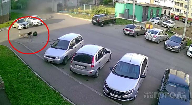 В Новочебоксарске собаки повалили и покусали женщину