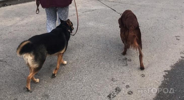 Рядом с Чебоксарами откроют новый приют для бродячих собак