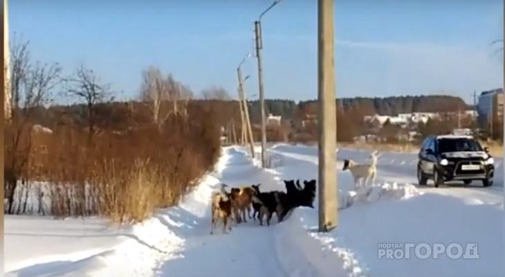 В Чувашии на борьбу с бездомными собаками выделили шесть миллионов рублей