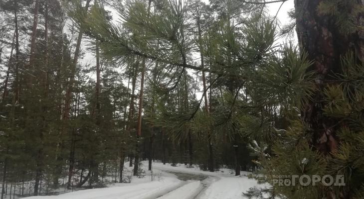 Чебоксарка раздела троих детей догола и оставила в московском лесу