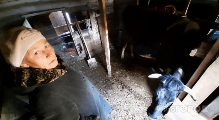 """Супруги держат двух коров возле Новочебоксарска: """"Если хорошо трудиться, 1000 рублей каждый день можно получать"""""""