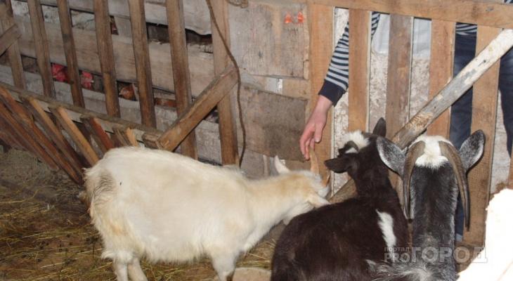 В Чувашии растет число новых фермерских хозяйств