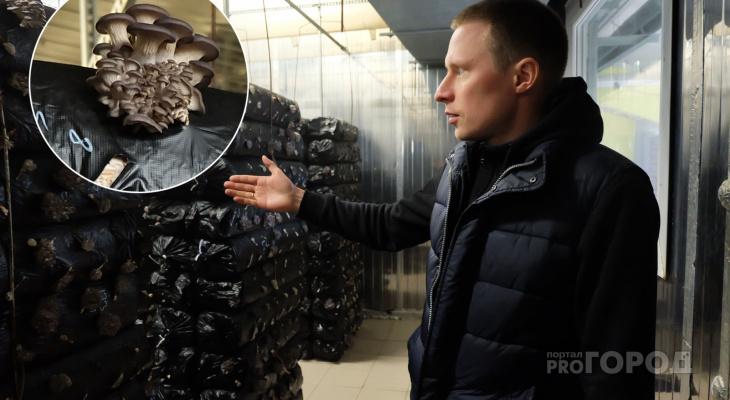 Как выращивают грибы на крупном производстве в Моргаушском районе