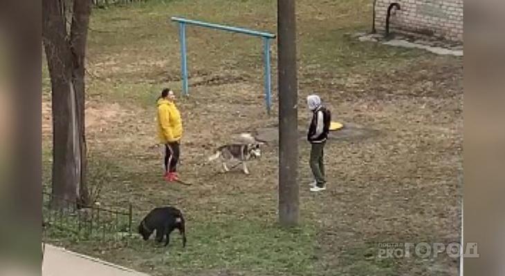 Что грозит владельцу собаки за отсутствие намордника, выгул на детской площадке и нападение на человека